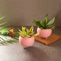 Green Minicules - Pastel Pink